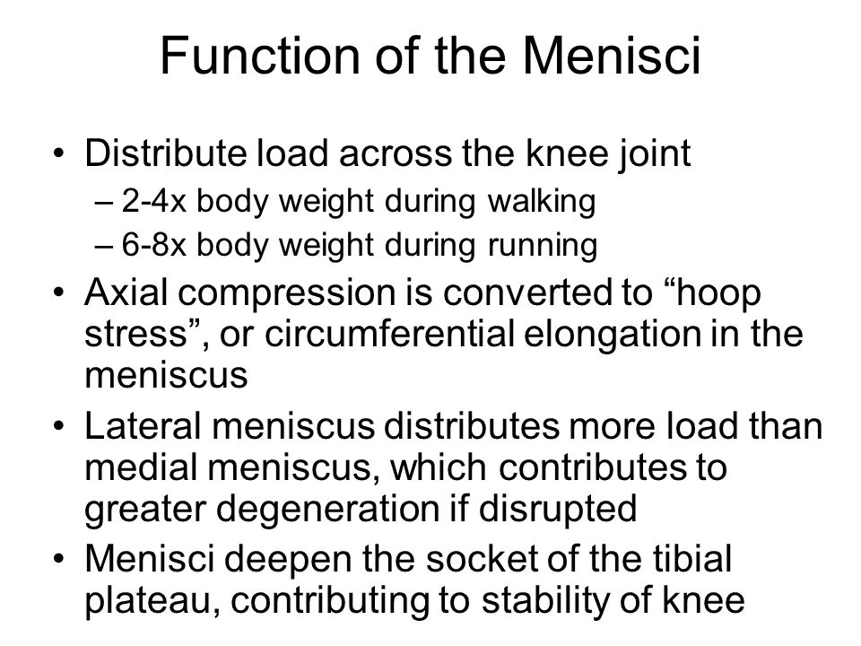 Function of the Menisci
