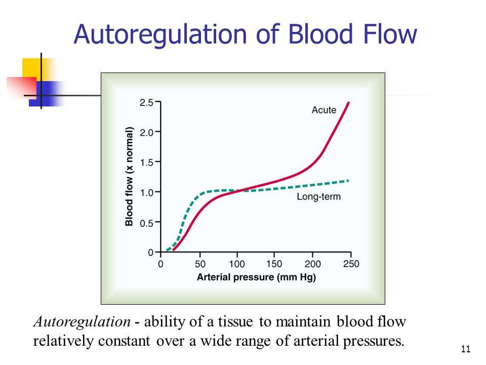 Autoregulation of Blood Flow