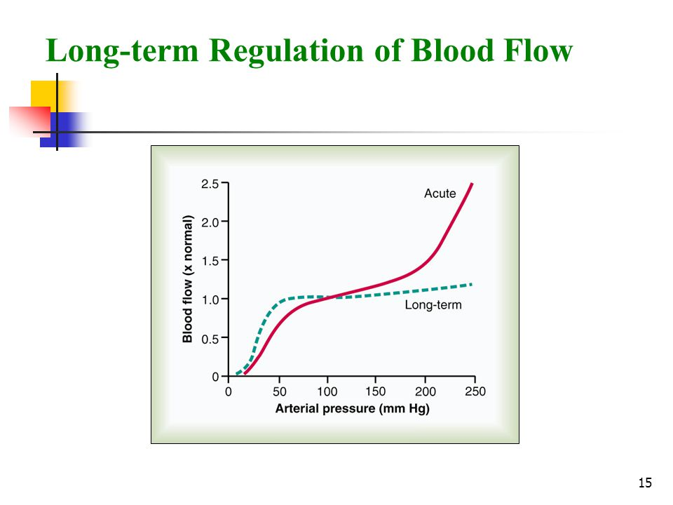 Long-term Regulation of Blood Flow