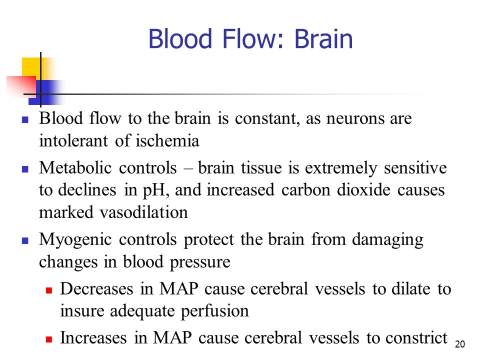 Blood Flow: Brain Blood flow to the brain is constant, as neurons are intolerant of ischemia.