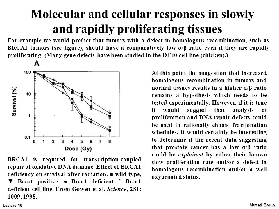 Molecular and cellular responses in slowly