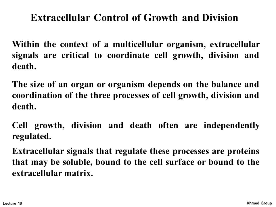 Extracellular Control of Growth and Division