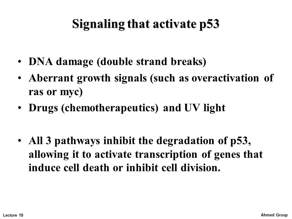 Signaling that activate p53
