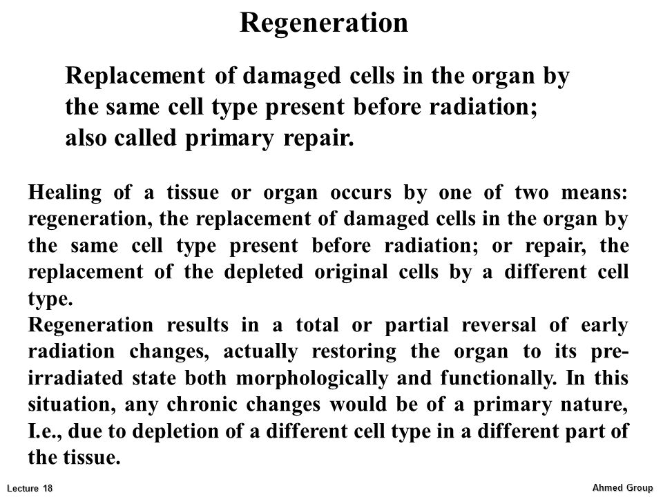 Regeneration Replacement of damaged cells in the organ by