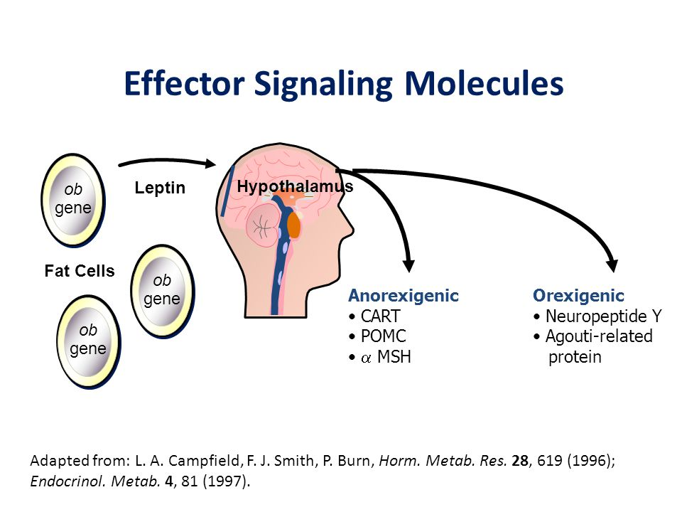 Effector Signaling Molecules