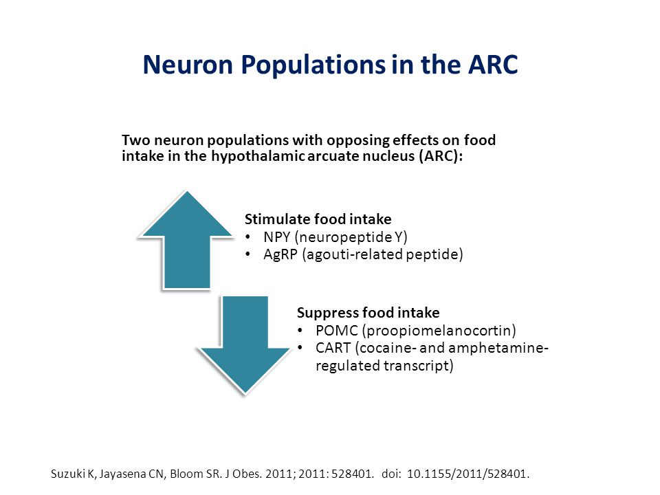 Neuron Populations in the ARC