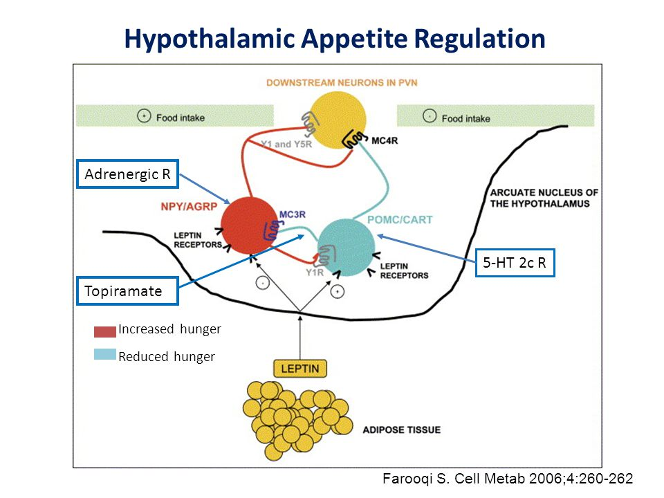 Hypothalamic Appetite Regulation