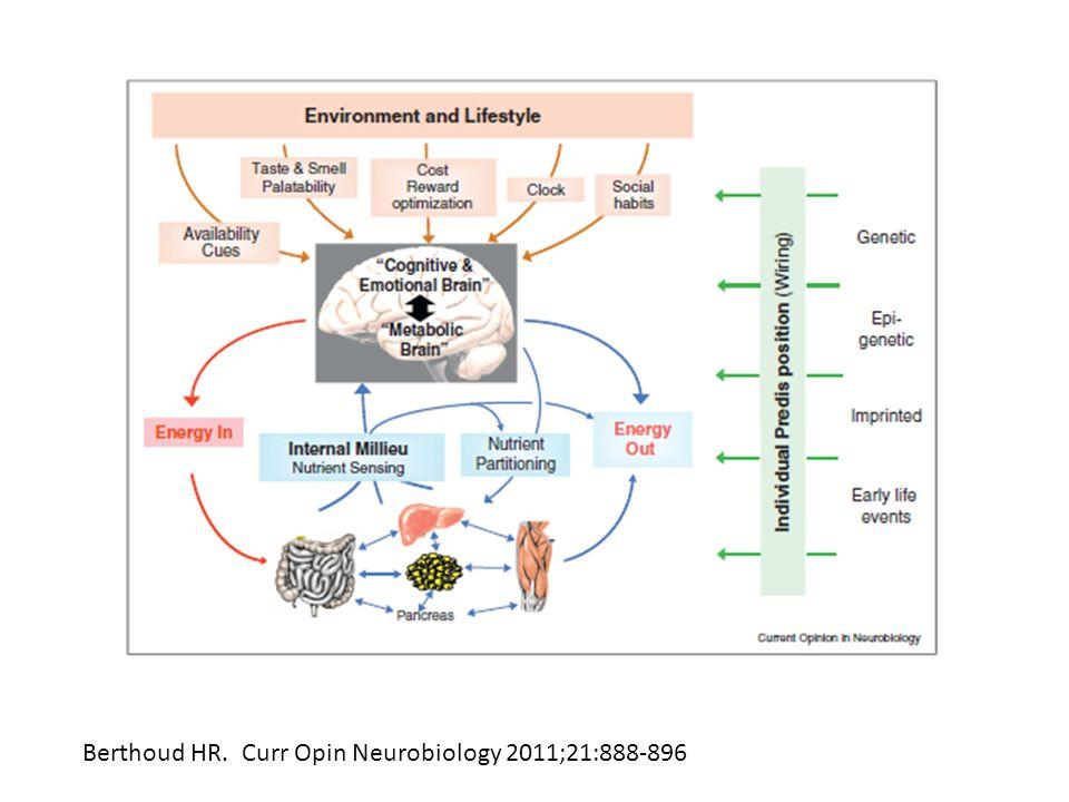 Berthoud HR. Curr Opin Neurobiology 2011;21:888-896