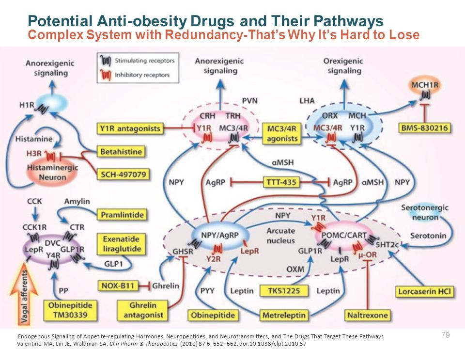 Potential Anti-obesity Drugs and Their Pathways