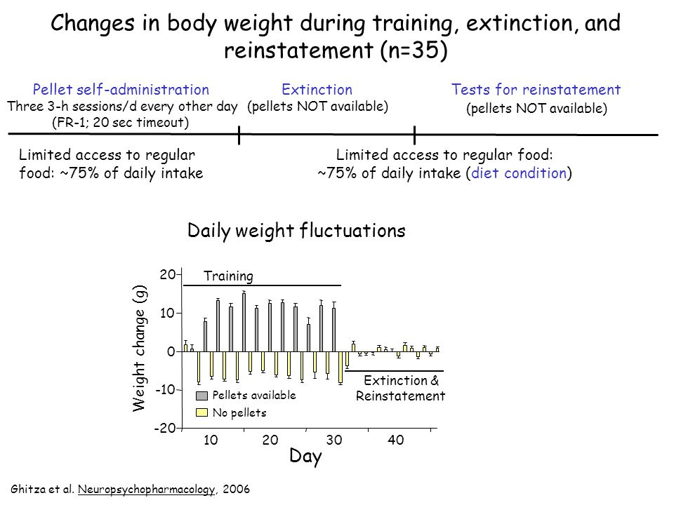 Changes in body weight during training, extinction, and reinstatement (n=35)