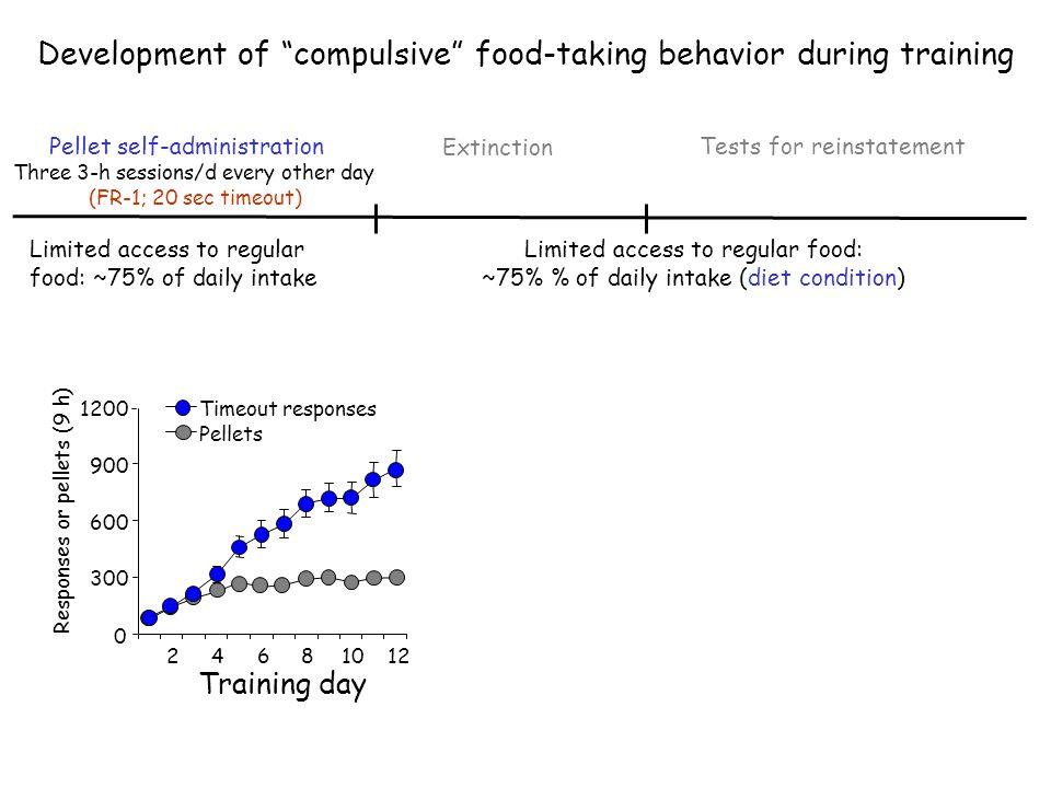 Development of compulsive food-taking behavior during training