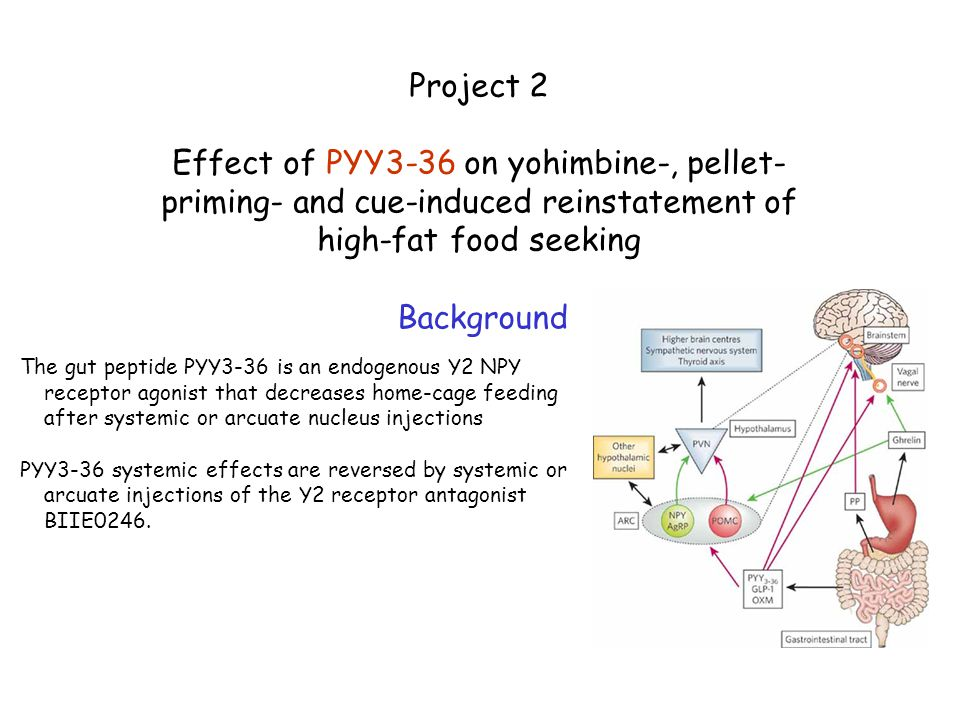 Project 2 Effect of PYY3-36 on yohimbine-, pellet-priming- and cue-induced reinstatement of high-fat food seeking.