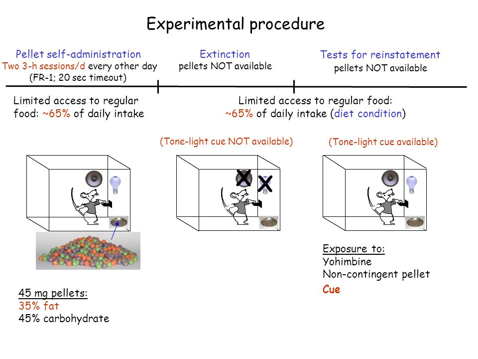 X Experimental procedure Pellet self-administration Extinction