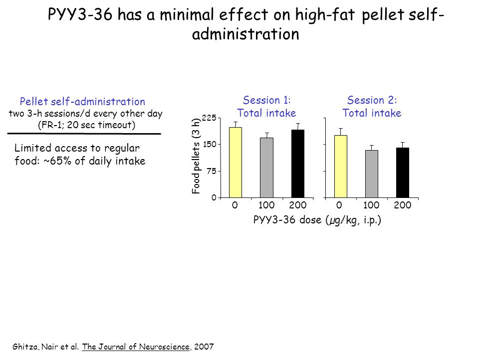 PYY3-36 has a minimal effect on high-fat pellet self- administration