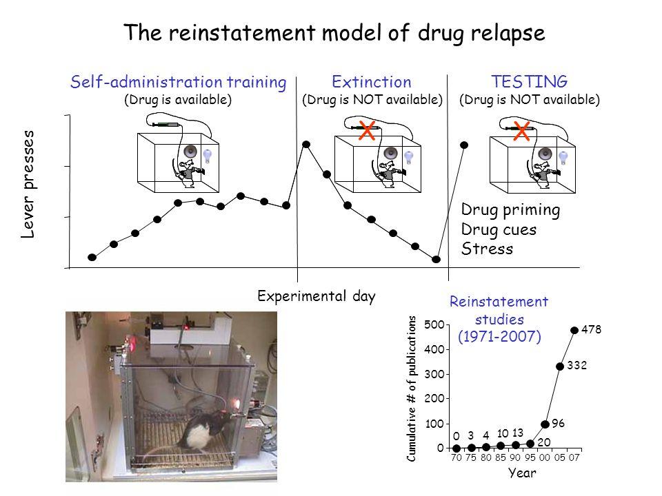 X The reinstatement model of drug relapse Drug priming Drug cues
