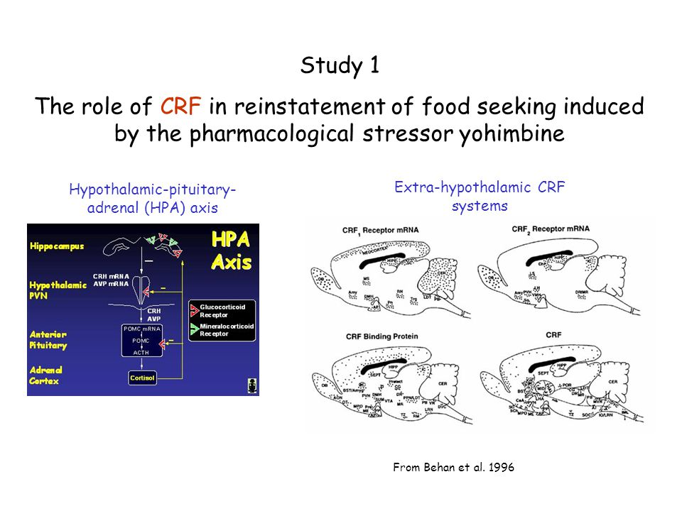 Study 1 The role of CRF in reinstatement of food seeking induced by the pharmacological stressor yohimbine.