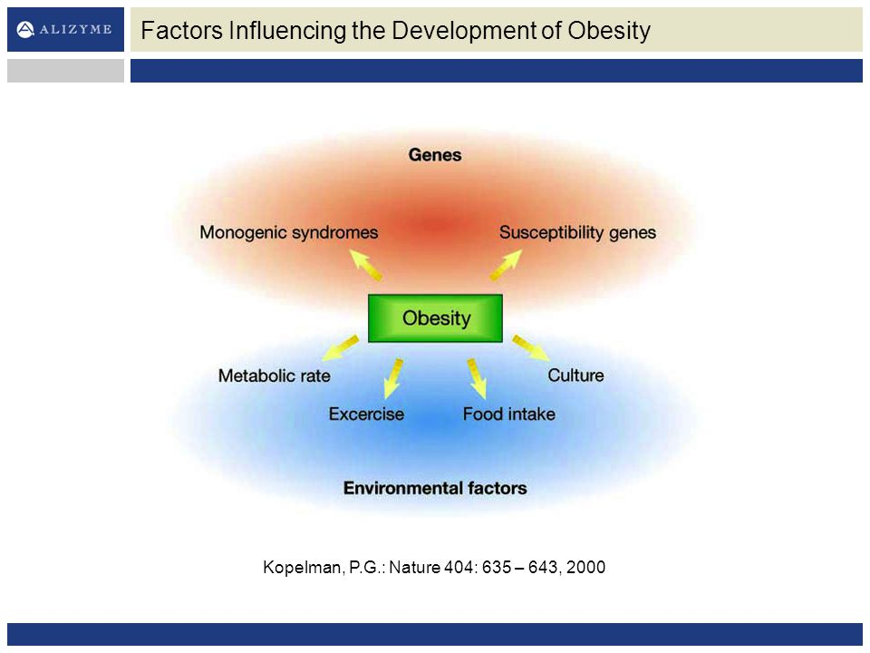Factors Influencing the Development of Obesity