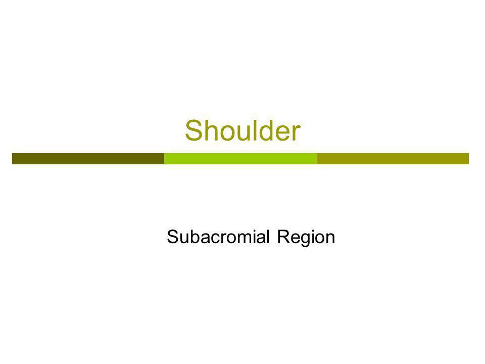 Shoulder Subacromial Region