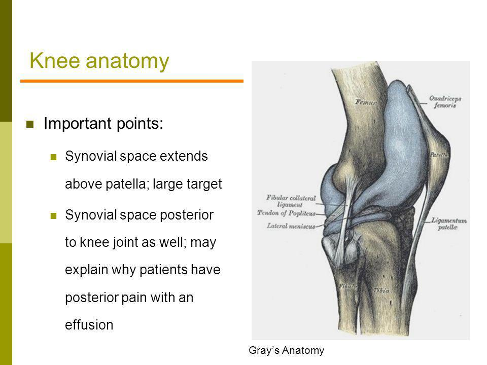 Knee anatomy Important points: