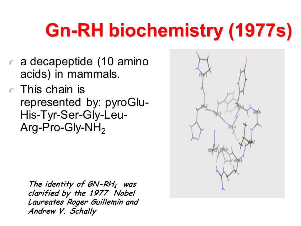 Gn-RH biochemistry (1977s)