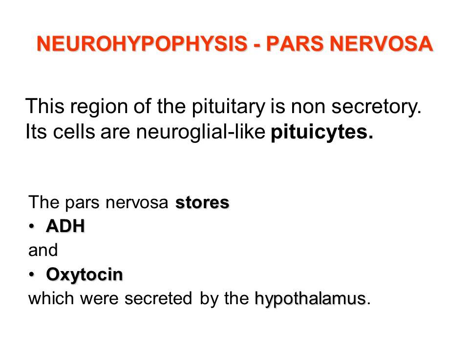 NEUROHYPOPHYSIS - PARS NERVOSA