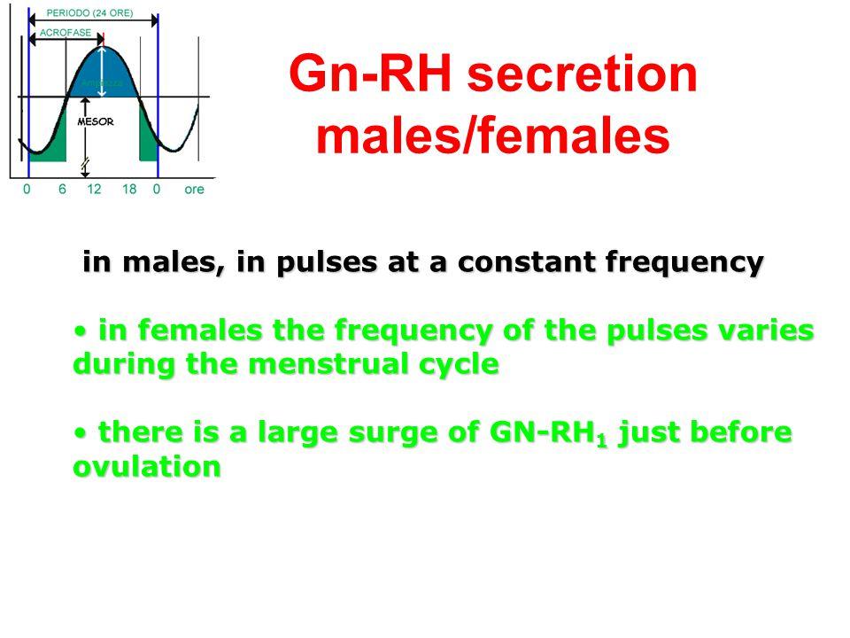 Gn-RH secretion males/females