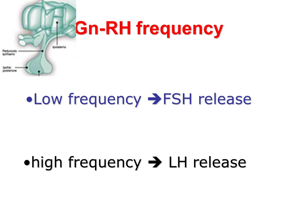 Gn-RH frequency Low frequency FSH release high frequency  LH release
