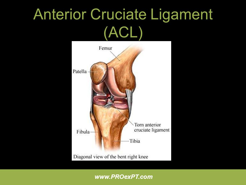 Anterior Cruciate Ligament (ACL)