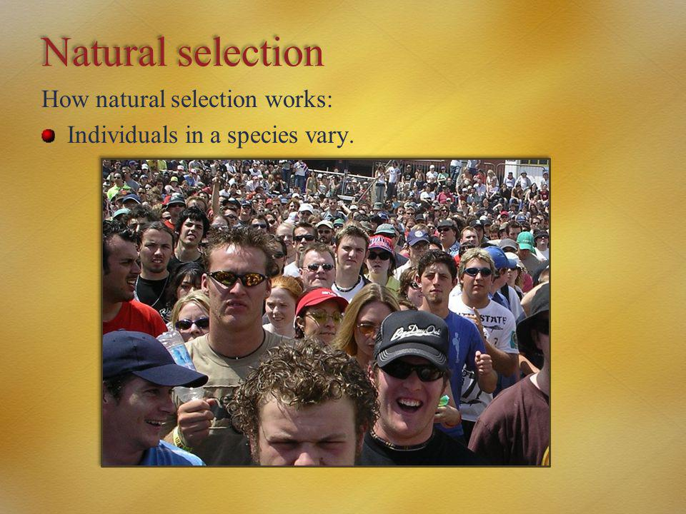 Natural selection How natural selection works: