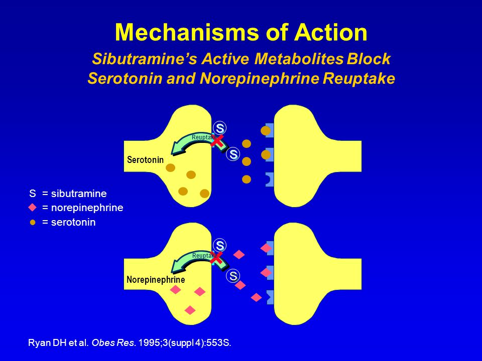 Mechanisms of Action Slide 9 Sibutramine's Active Metabolites Block