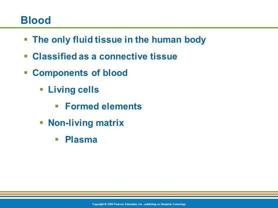 Blood The only fluid tissue in the human body