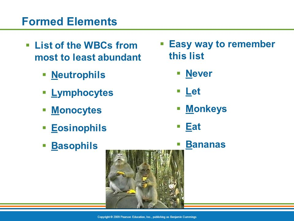 Formed Elements Easy way to remember this list