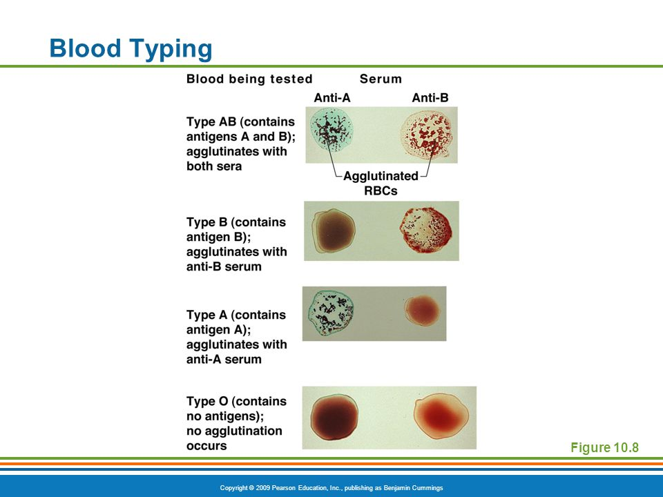 Blood Typing Figure 10.8