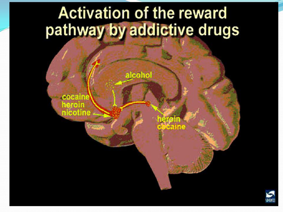 Summary: addictive drugs activate the reward system via increasing dopamine neurotransmission