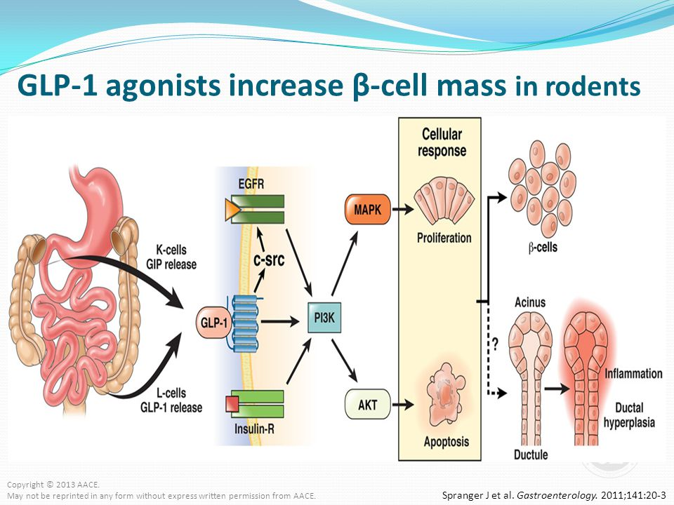 GLP-1 agonists increase β-cell mass in rodents