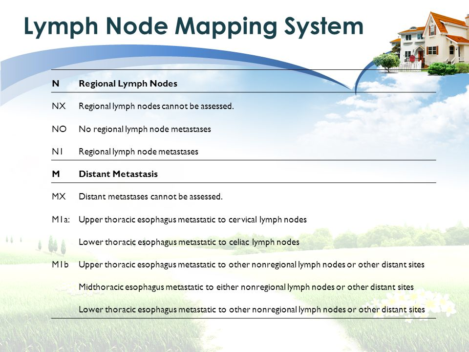 Lymph Node Mapping System