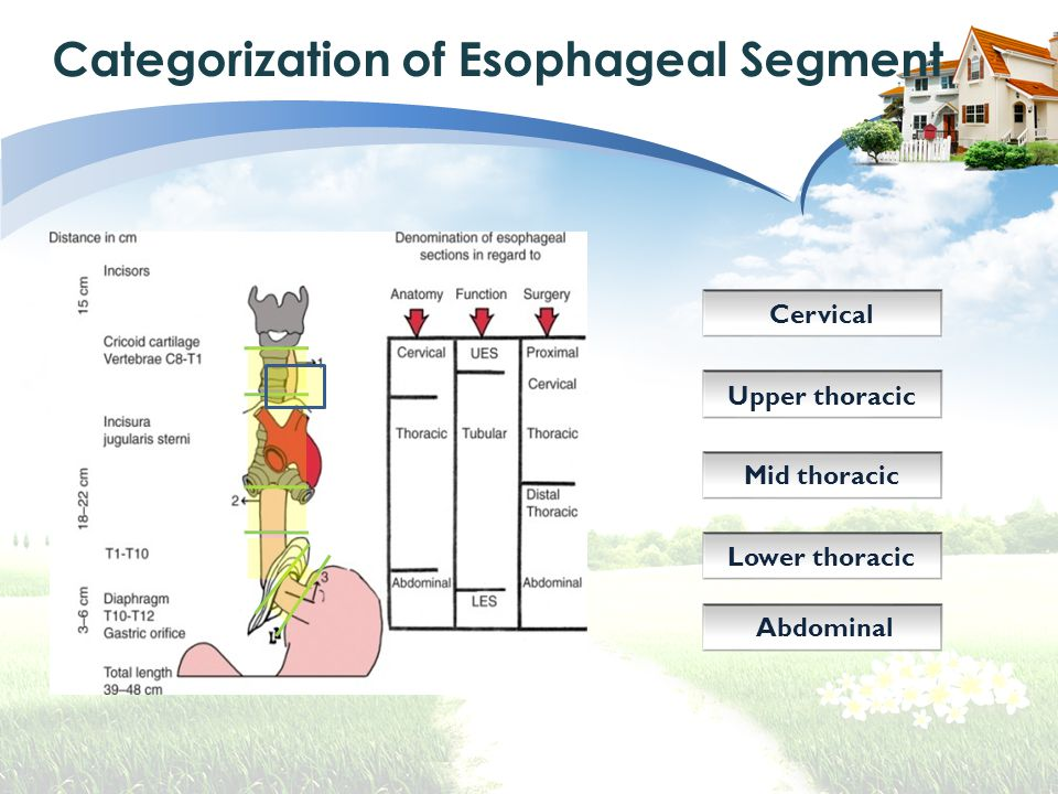 Categorization of Esophageal Segment