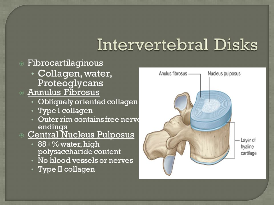 Intervertebral Disks Collagen, water, Proteoglycans Fibrocartilaginous