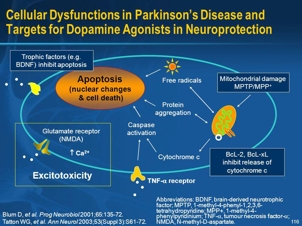 Trophic factors (e.g. BDNF) inhibit apoptosis