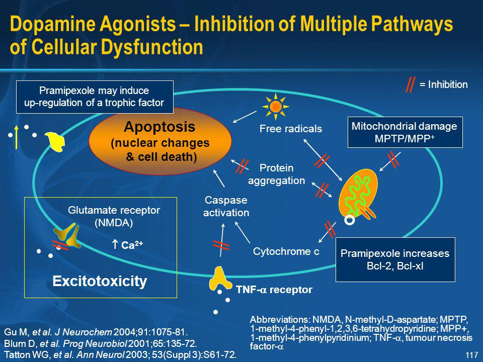 Section I Dopamine Agonists – Inhibition of Multiple Pathways of Cellular Dysfunction. Caspase. activation.
