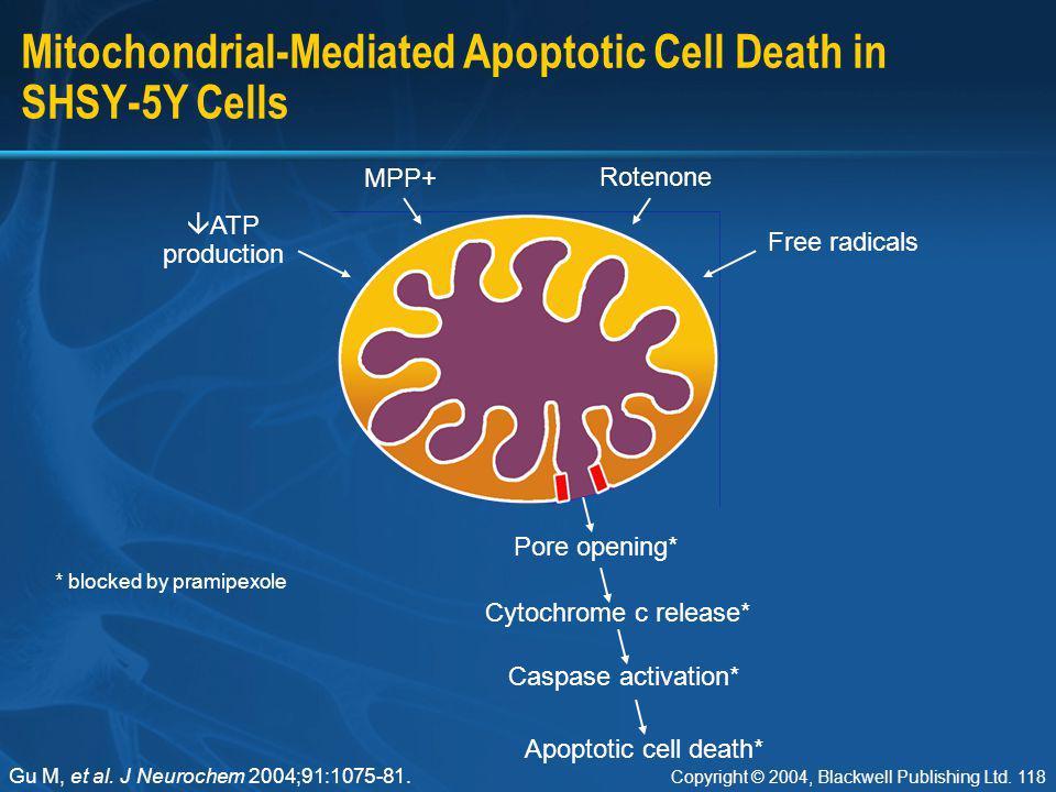 Mitochondrial-Mediated Apoptotic Cell Death in SHSY-5Y Cells