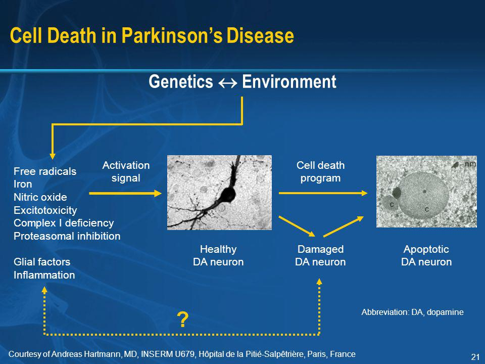 A discussion on the current treatment strategies for parkinsons disease