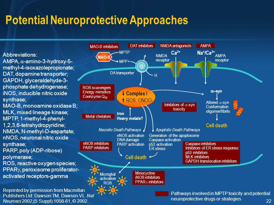 Potential Neuroprotective Approaches