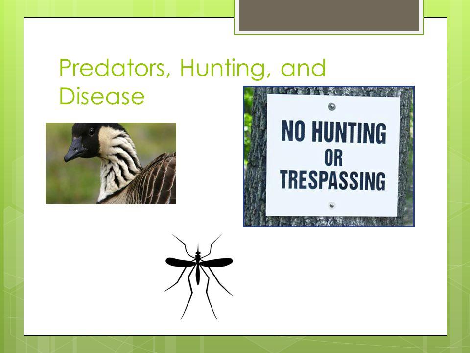 Predators, Hunting, and Disease
