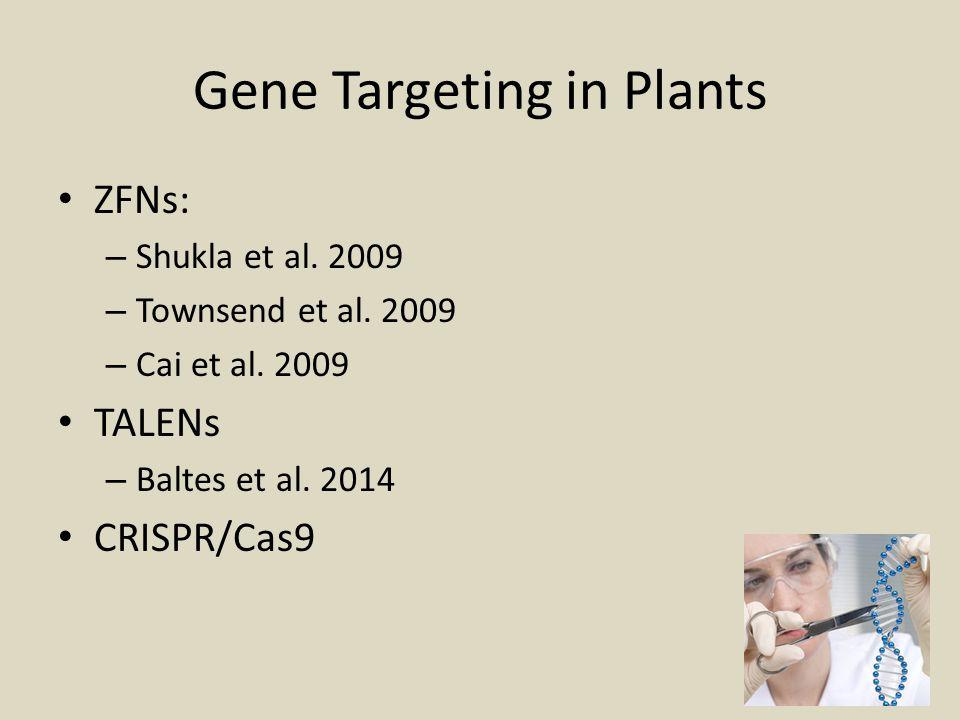 Gene Targeting in Plants