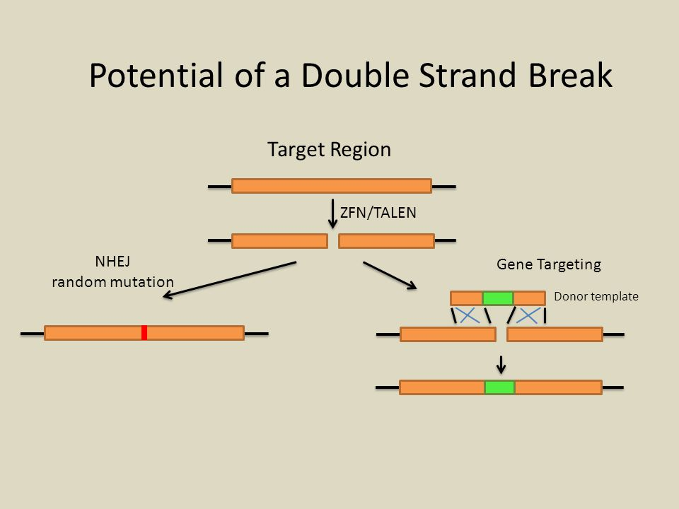 Potential of a Double Strand Break