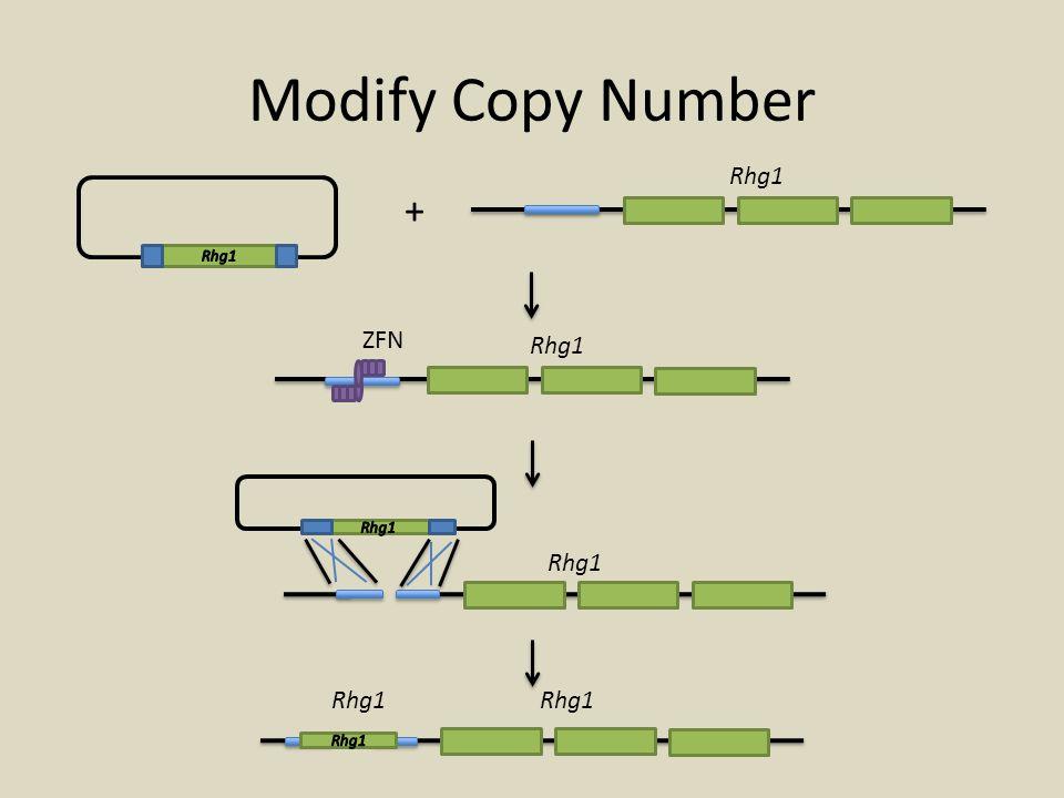 Modify Copy Number Rhg1 + Rhg1 ZFN Rhg1 Rhg1 Rhg1 Rhg1