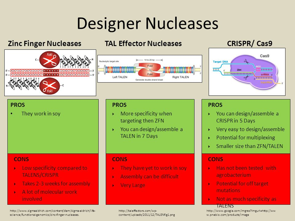 Designer Nucleases Zinc Finger Nucleases TAL Effector Nucleases