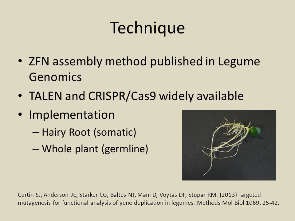 Technique ZFN assembly method published in Legume Genomics