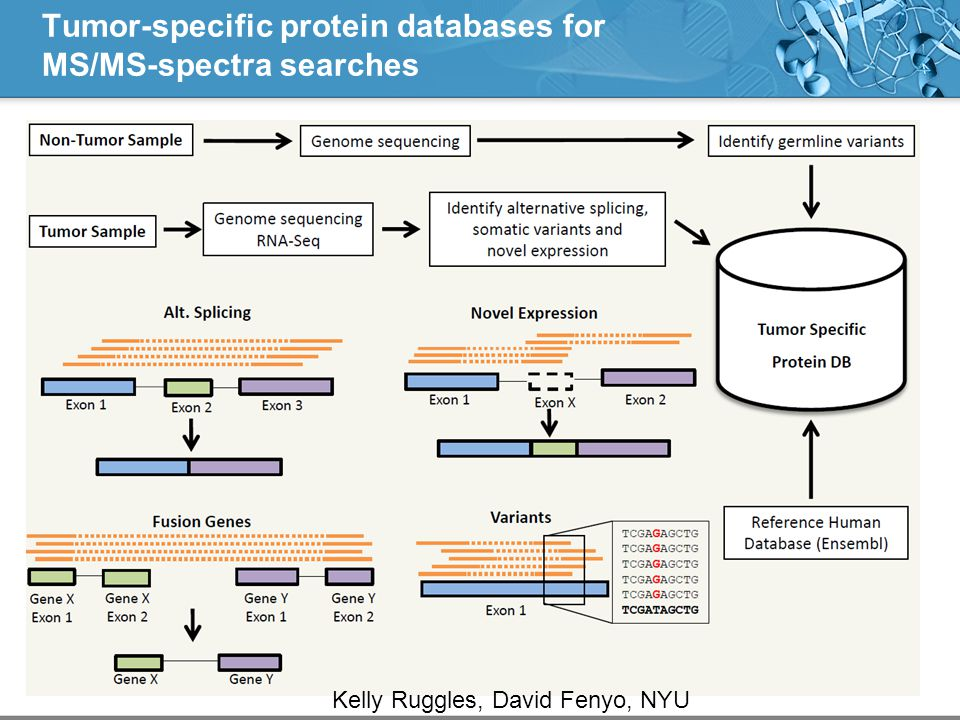 Tumor-specific protein databases for MS/MS-spectra searches